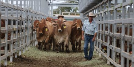 Ruralco Commercial Cattle Competition results here