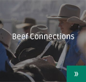 Beef Connections