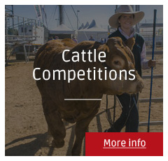Beef Australia 2015 - Cattle Competitions